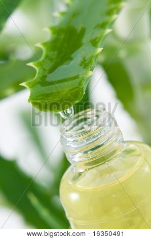 aloe vera juice and bottle