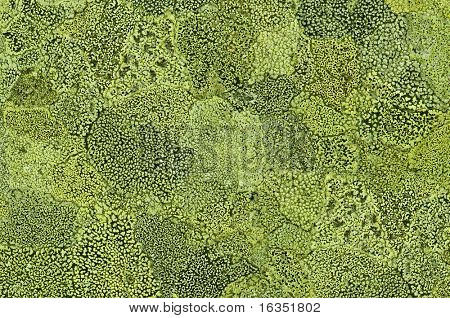 green mold texture on stone