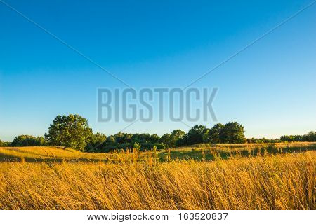 A field with yellowing grass green oak tree against the blue clear sky