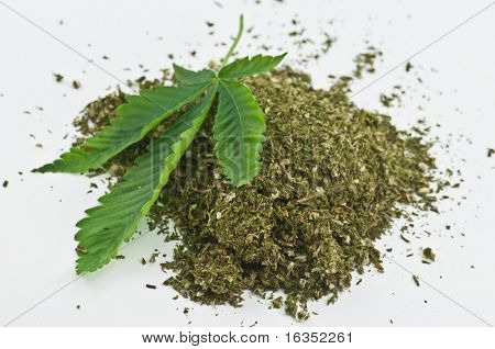 dry marijuana and green leaf