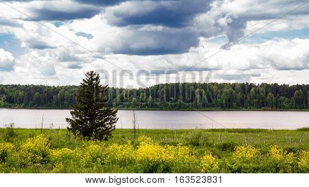 lonely tree at a pond on a summer day