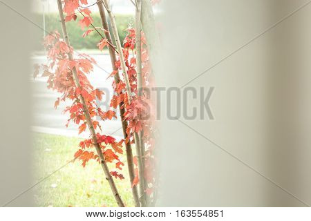 Red leaves of a small tree seen with softened light through a fence