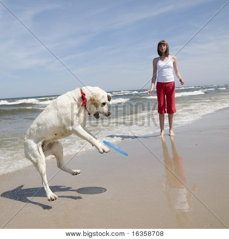 Labrador Retriever and woman playing with plastic flying disc