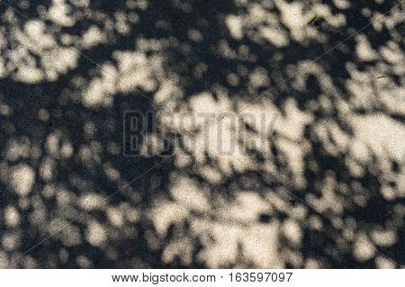 Dappled Sunlight On Concrete, Tree Shadow, Background