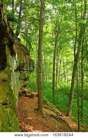 Mossy rock cliff and woodland scenery of Turkey Run State Park in Indiana.