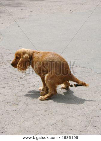 Distribuidor de perro