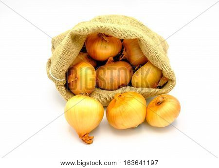 Authentic onions sac of Galicia Spain isolated on white background