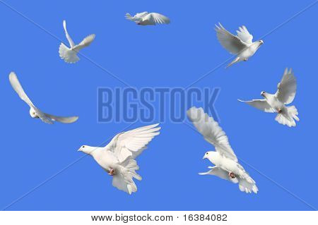 Concept image of Peace - White Dove's flying in a circle against a bright blue sky.