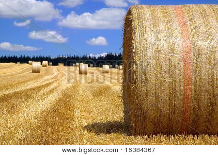 Rural landscape, Hay bales in a field on a bright sunny day.