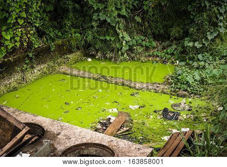 A green mossy dirty ditch at backyard photo taken in Semarang Indonesia java