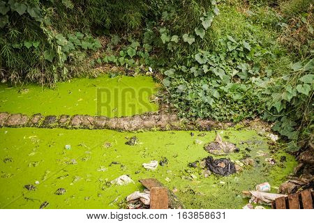 A green mossy dirty ditch photo taken in Semarang Indonesia java