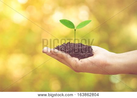 Hand holding a young baby tree with green and yellow bokeh background / Protect and conserve nature concept