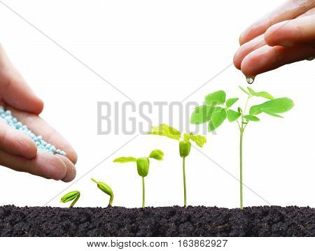 Agriculture. Hand of a farmer nurturing young baby plants growing in germination sequence on fertile soil isolated