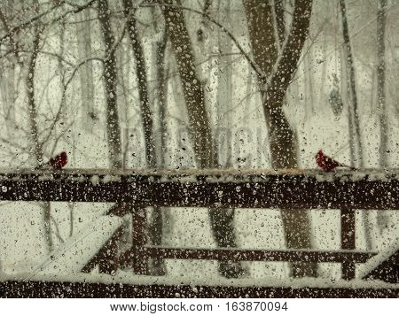 rain drops on a window with northern cardinals on a deck in the background