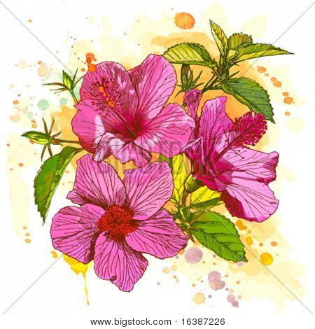 Hibiscus flower - vector watercolor paint. Elements on separate layers