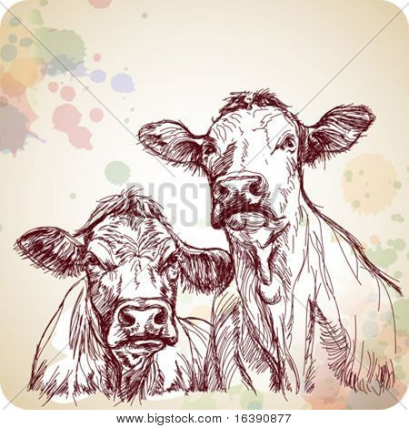 two cows hand draw sketch & color paint background