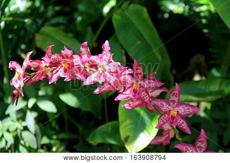 Gorgeous image of bright pink exotic orchids in shade of botanical gardens
