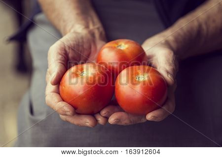 Detail of wrinkled woman's hands holding a handful of red ripe tomatoes. Selective focus