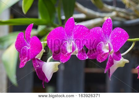 Purple orchids Violet orchids. Orchid is queen of flowers. Orchid in tropical garden. Orchid in nature soft focus