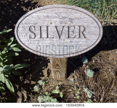 Wood sign engraved with lettering marking silver foliage growing in a flower garden