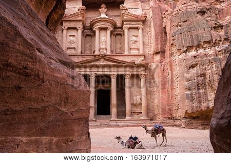 Ancient nabataean temple Al Khazneh (Treasury) located at Rose city - Petra, Jordan. Two camels infront of entrance. View from Siq canyon.
