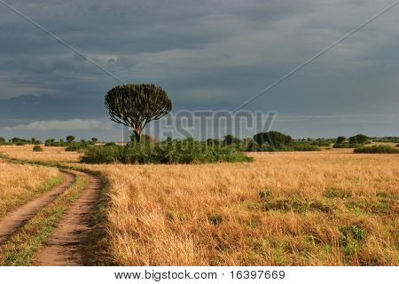 African savanna in Queen Elizabeth NP, Uganda