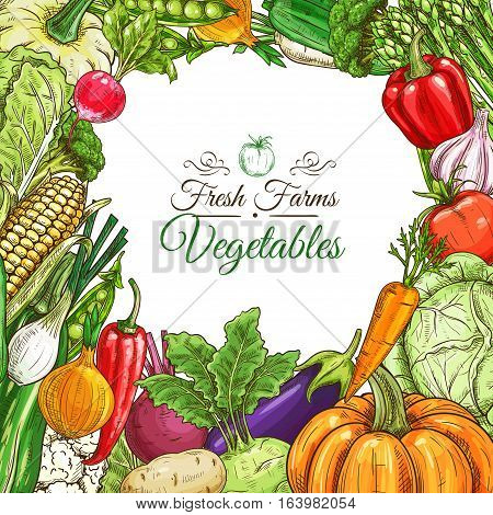 Vegetables poster or vegetarian menu design template. Fresh farm tomato and pepper, carrot, onion and garlic, pumpkin and potato, eggplant, corn, beet, zucchini, pea, cabbage, lettuce vegetable sketches
