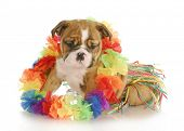 picture of hula dancer  - puppy dressed like a hula dancer  - JPG