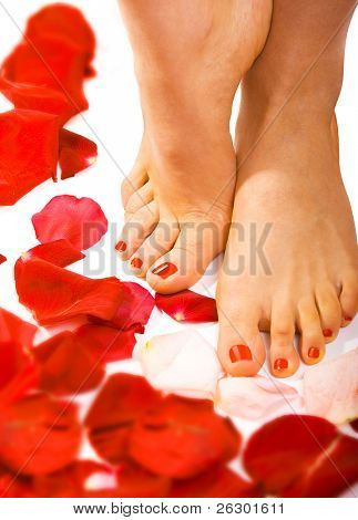 walking on the petals