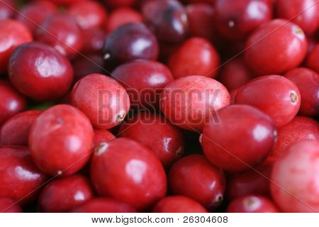 delicious cranberries ready for christmas