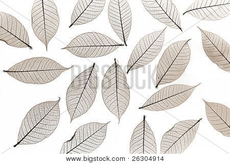 sepia colored skelton leaves