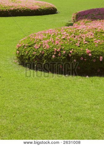 Cut Grass Lawn With Bushes