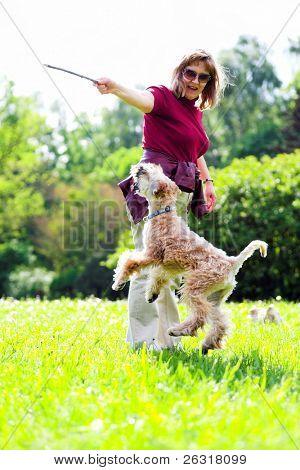 Jumiping dog on green grass (Irish soft coated wheaten terrier)