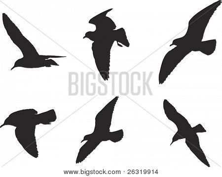 seagulls silhouette, vector