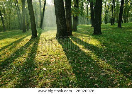 Por la mañana en el bosque de otoño