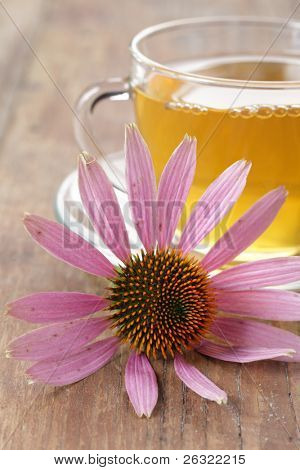 Echinacea purpurea flower against the cup of herbal tea