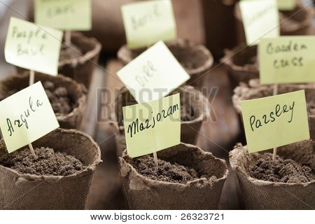 Labeled jiffy pots with planted seeds of vegetables