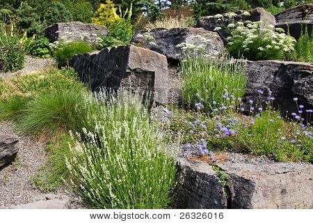 A beautiful alpine garden containing a wide variety of plants such as lavender, thrift and yarrow.