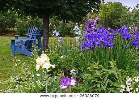 A backyard garden of iris bordering a lawn.