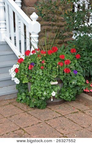 A larger planter filled with geraniums, petunias and ivy.