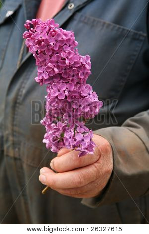 A farmer type figure in coveralls offering a stem of lilac.