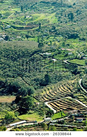 Terraced fields in Western Ghats mountains. Kodaikanal, Tamil Nadu, India