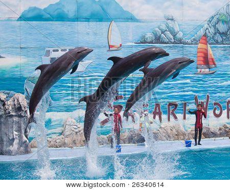 nicht identifizierter Personen Trainer zeigt vier leben Delfine