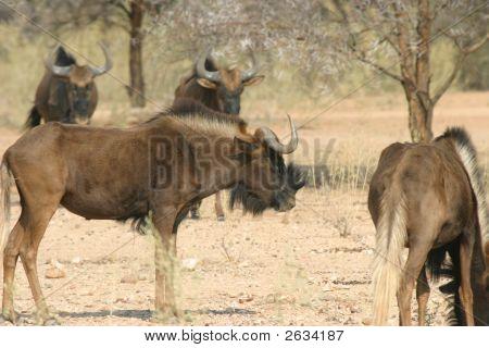 Grupo de ñus