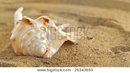 concha na areia