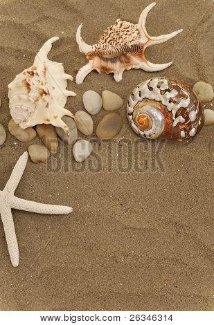 conchas y piedras en la arena
