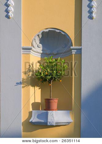 Árbol de limón en olla de barro