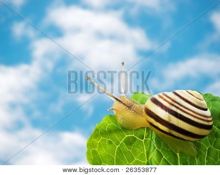 Sky and snail