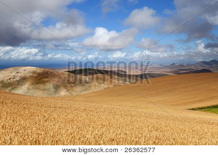 wheat field and mountans on horizon