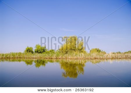 blossom weeping willow reflected into water, danube delta landscape